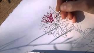 Dahlia drawing