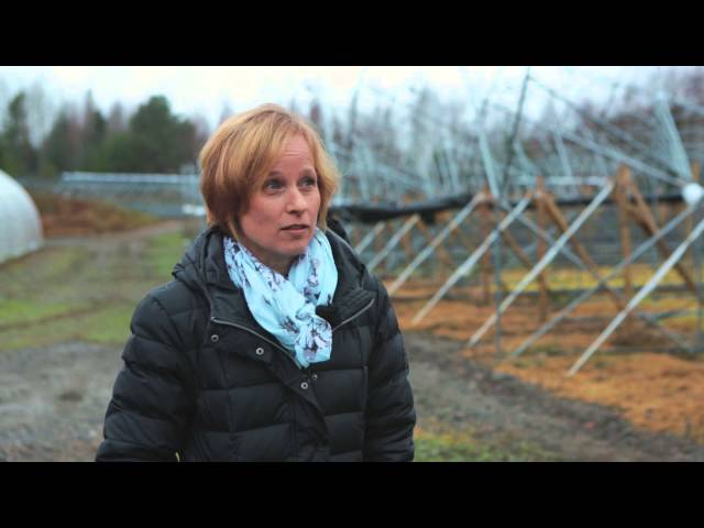 Puutarhatalous - Hämeen ammattikorkeakoulu