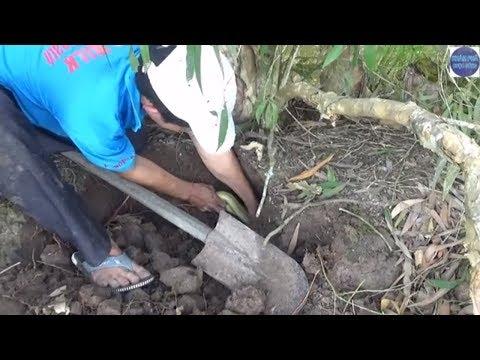 Đào hang rắn sau căn nhà bỏ hoang và cái kết.../dig out the cave to catch the snake
