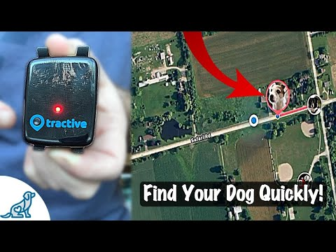 GPS Pet Tracker - Tractive Long Term Review - Professional Dog Training Tips