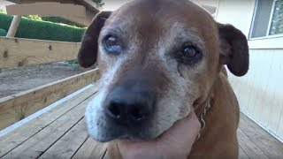 Senior Dog Left Behind On The Streets After His Family Moved Away Without Him