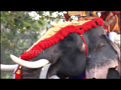 Thrikkadavoor Sivaraju HEAD LIFTING and Royal Entry 2018