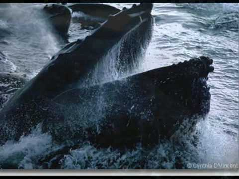stop killing whales Stop whaling january 17, 2012 whaling is also inhumane to poison us and kill mammals the whale hunters believe that whaling is not whaling must stop said.