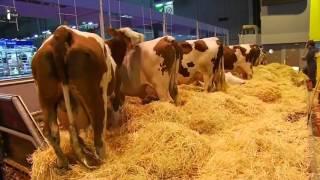Les agriculteurs attendent François Hollande de pied ferme