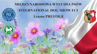 MIĘDZYNARODOWA WYSTAWA PSÓW INTERNATIONAL DOG SHOW FCI Leszno PRESTIGE - sobota
