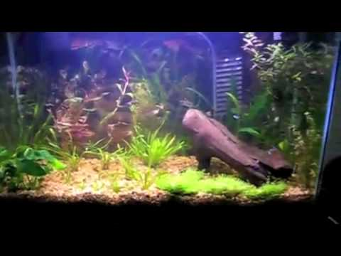 29 gallon planted fish tank youtube for 29 gallon fish tank