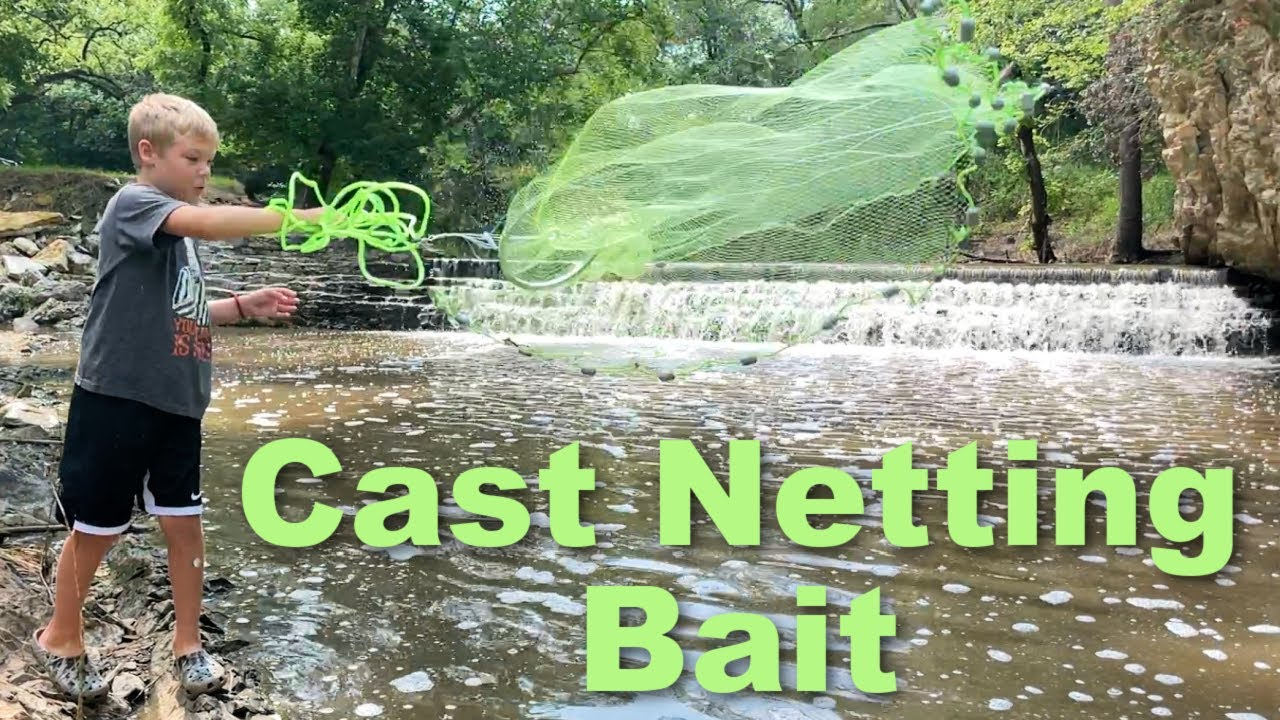 Cast Netting Bait for His PET BASS!