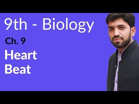 Heart Beat - Biology Chapter 9 Transport biology - 9th Class