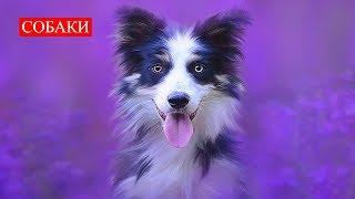 Собаки | Самые Верные Друзья | Релакс | Dogs