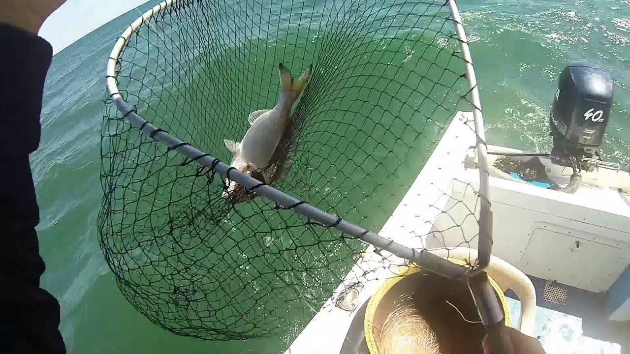 Orate Pescate Con Il Granchio A Palamito