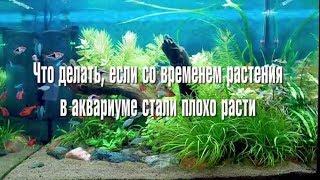 Что делать, если  со временем растения в аквариуме стали плохо расти