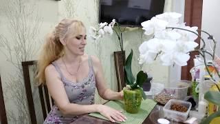 Если у орхидеи мало корней... Какой способ посадки я выбрала?