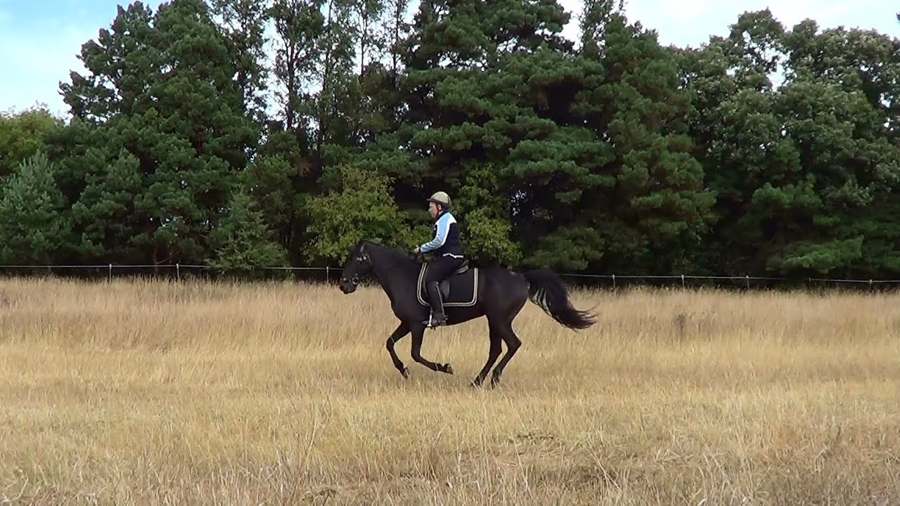 Naturally gaited Tennessee walking horse canter in regular and slow motion - YouTube