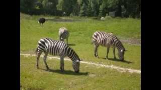 Zoo w Opolu - goryle, nosorożec i inni...