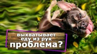 Как отучить щенка или взрослую собаку выхватывать еду из рук.