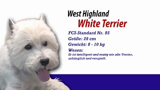 West Highland White Terrier - Meister Petz Tv Rasseportrait Mpt 101