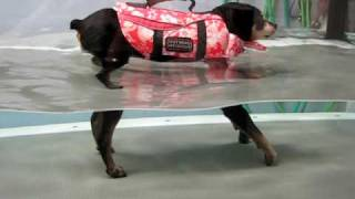 East End Vet Physical Rehab; Sparky Session 3 Underwater Treadmill.avi