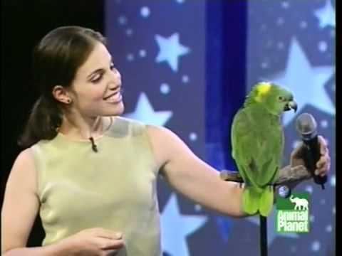 видео: ПОПУГАЙ ЗАЖИГАЕТ amazon parrot