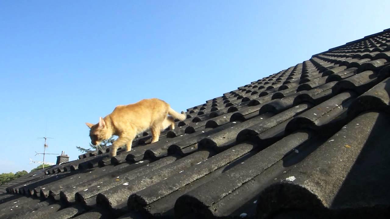 katzen auf dem dach youtube