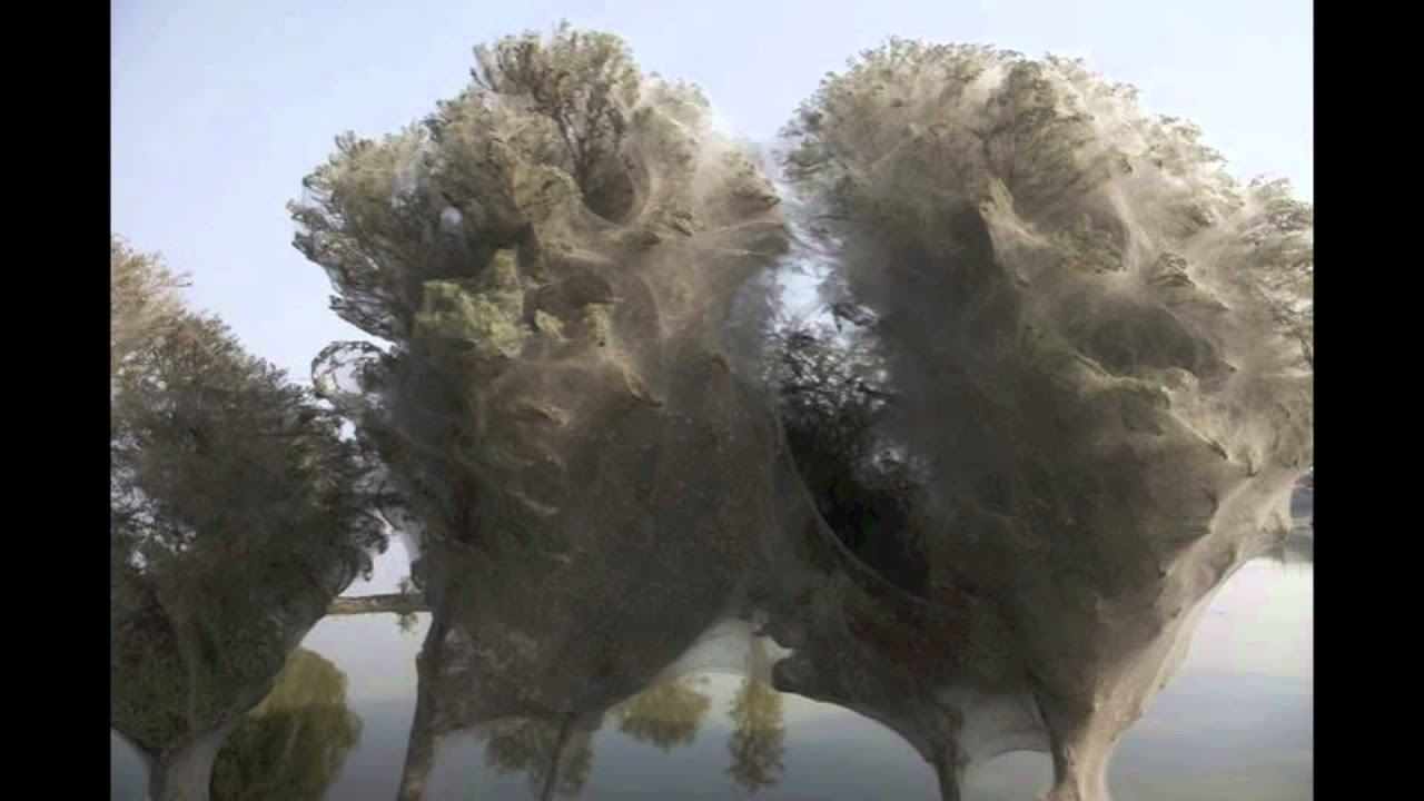 Spider web trees after flood in pakistan youtube