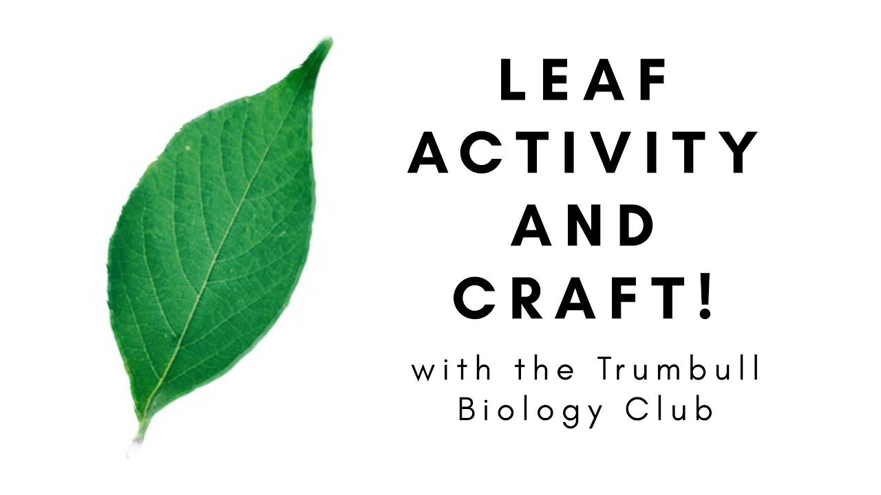 "Trumbull Students' Biology Club Presents, ""Leaf Activity and Craft!"""