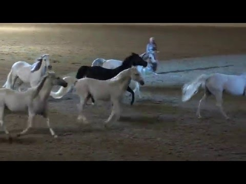Liberty with 10 horses - Sylvia Zerbini - Night of the Horse 2016 - Del Mar National Horse Show