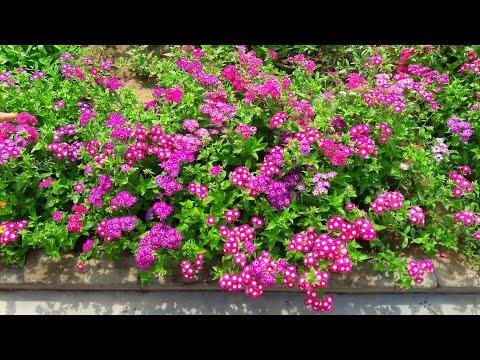 My Backyard Garden || Backyard Plants || Spring Garden