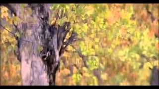 Roja Jaaneman Tu Hi   Arvind Swamy   Madhoo   Roja Movie Songs   S P Bala   A R Rahman Hits