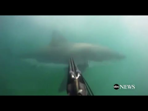 Great White Shark Attack [GoPro Footage]