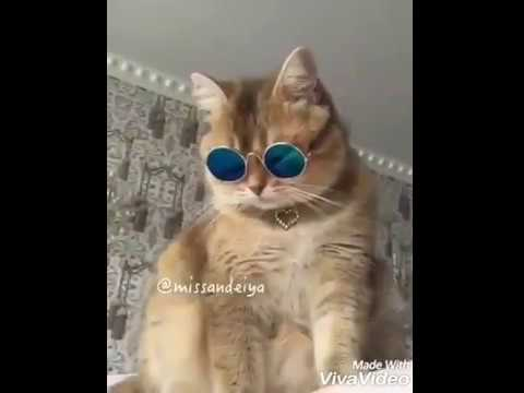Lagdi Punjab Di Aa : Guru Randhawa   Cat Version   Dubbing Vines