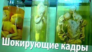видео Бесплатные музеи Киева