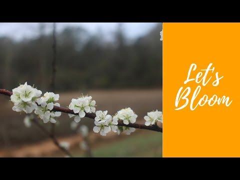 Let's Bloom part 1