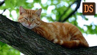 Почему кошки мурлыкают? РЖЯ