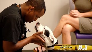 Come Inside the Clinic and Live The Vet Life