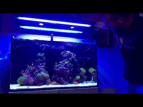 Red Sea Reefer 250 | Happy New Year | Coral Discussion | Patience Is My Focus
