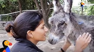 Family Moves To India To Help Save Animals: Animal Aid Unlimited   The Dodo