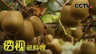 《透视新科技》 20201220 猕猴桃的新生| CCTV科教 - YouTube