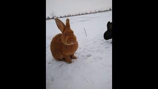 Кролики сбежали в поле
