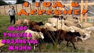 Год жизни в деревне. Обзор хозяйства, участка, жизни. Овцы разнесли сарай. Козы пожрали всю капусту.