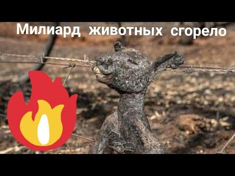 Более одного миллиарда животных погибли в результате лесных пожаров в Австралии, передаёт NBC News!