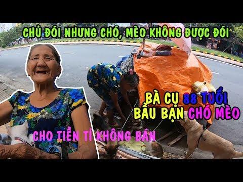 Bà Lão 88 Tuổi Ngủ Vỉa Hè Cùng Đàn CHÓ MÈO Thấy Xót Thương | PHONG BỤI