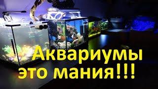Нано аквариум дома