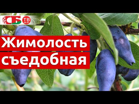 Ягода-Клубника - Home