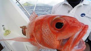 Смотреть видео Рыбалка на Маврикии
