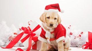 Приколы с Игрушками - Собака Новый Год Merry Christmas