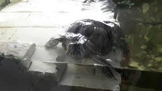 Террариум для красноухой черепах