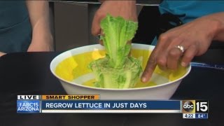 Regrow lettuce in just days