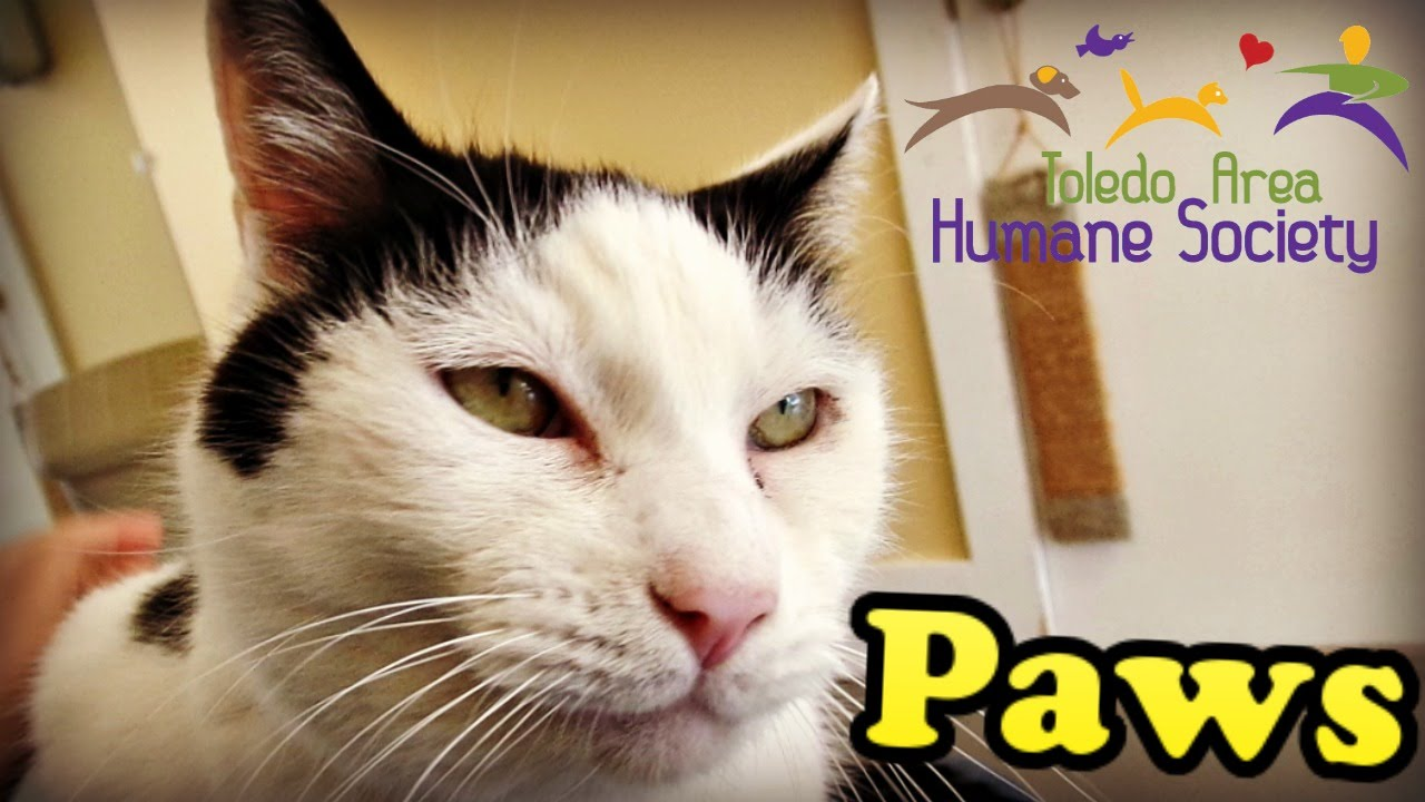Adopted Paws Toledo Area Humane Society