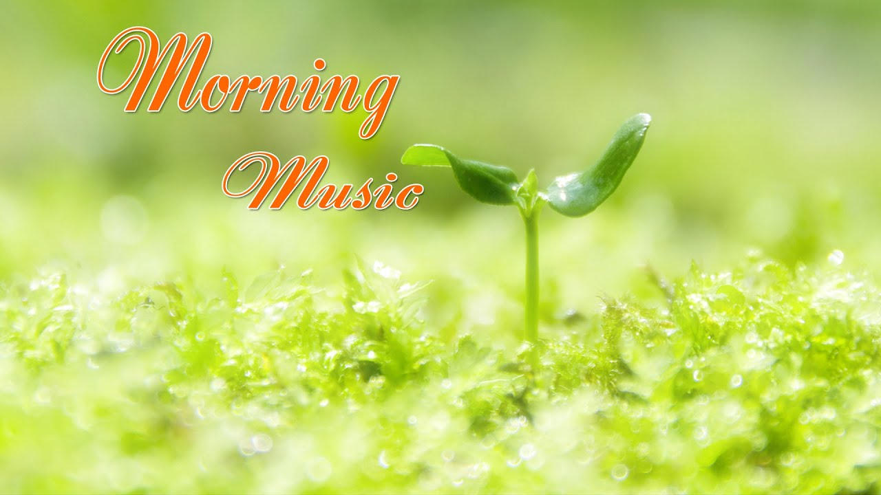Morning Relaxing Music - Peaceful Piano With Birds Singing For Stress Relief/Study/Positive Feelings