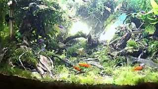Primeval forest tank